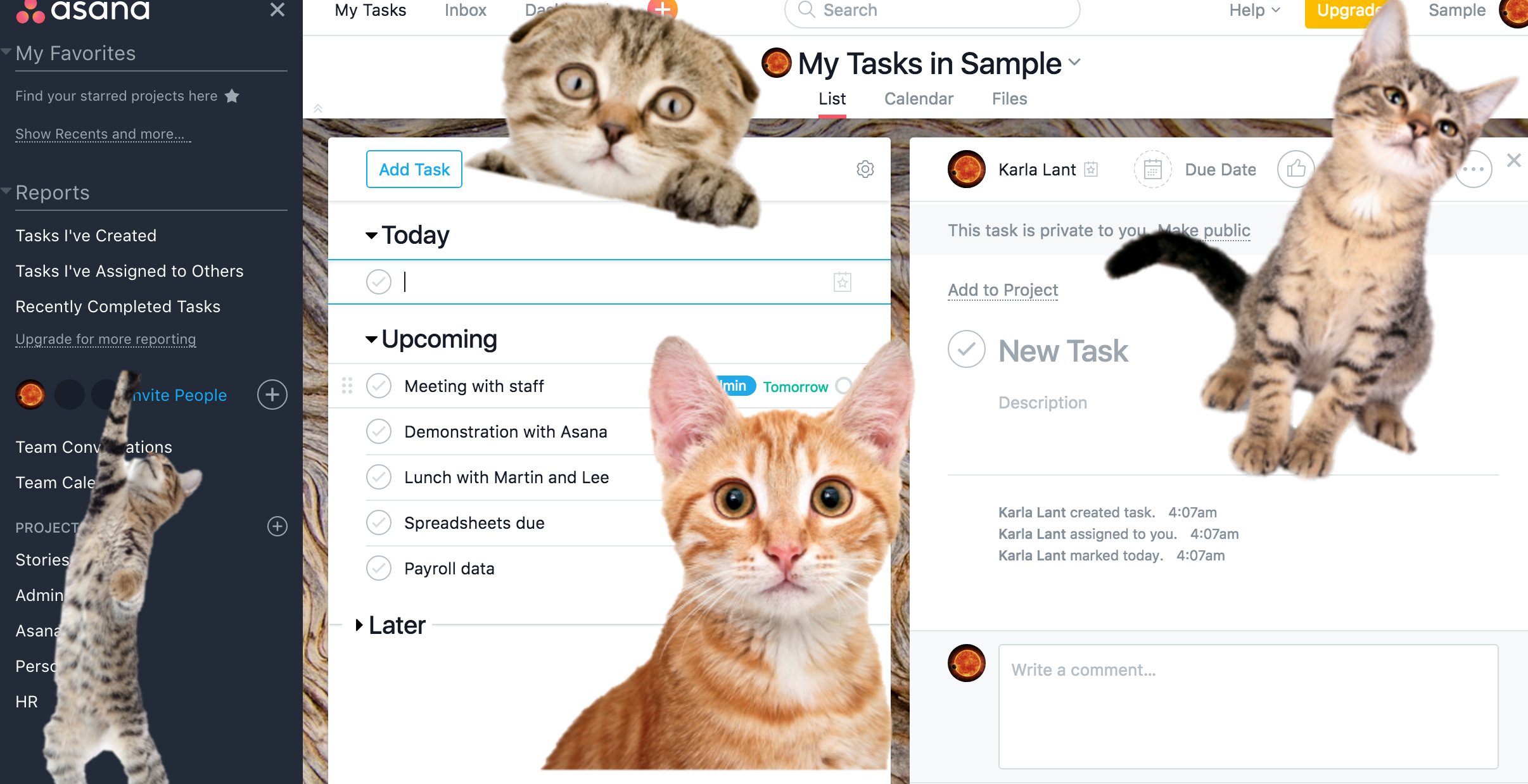 Asana experimental features